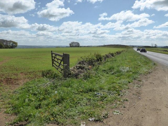 Crop field next to A424 near Sezincote House