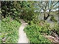 SX1254 : The Saints' Way near Golant by Dave Kelly