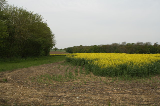 Rape Field on the Ditchingham Estate