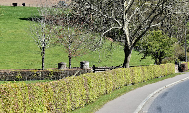 Beech hedge, Killarn, Dundonald (May 2017)