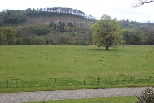 Tree in parkland, Llanerchaeron