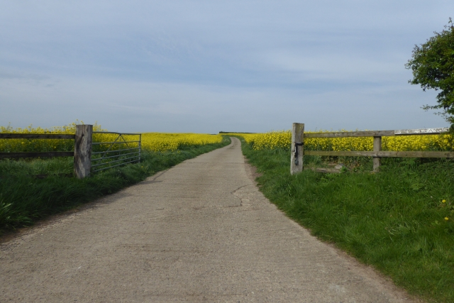Track to Wighill Grange