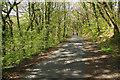 SX5259 : Plymbridge Woods by Stephen McKay