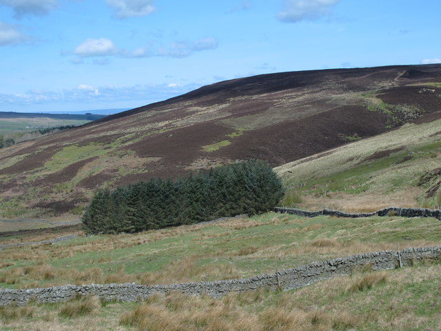 Rough pastures and plantation south of Sipton Cleugh