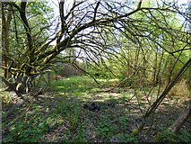 NS3174 : Site of Birkmyre Park tennis courts by Thomas Nugent