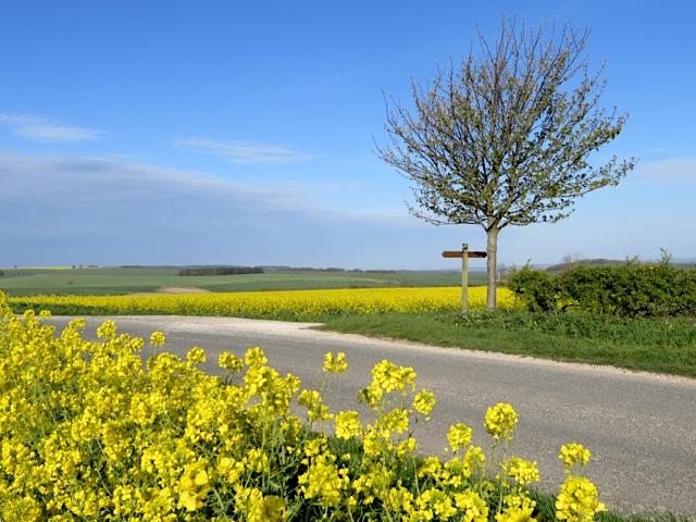 Lane to Wharram Percy