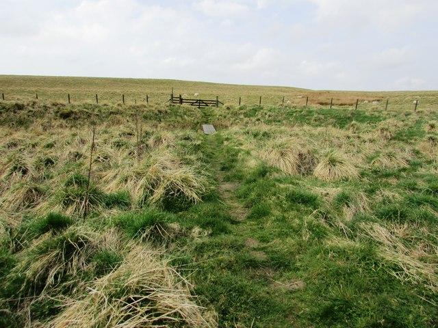 Path from limekilns, Lomond hills