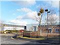 SU8591 : A Bit of Mistletoe on the Business Park by Des Blenkinsopp