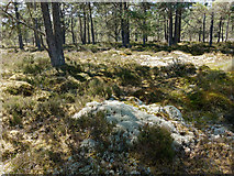 NH5753 : Dry area of Monadh Mòr SSSI by Julian Paren