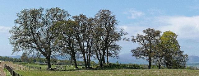 Outliers of Drummondreach Oak Wood