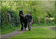 SO8688 : Horse on the towpath at Greensforge, Staffordshire by Roger  Kidd