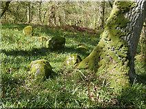NH5857 : Part of the Hut Circle I, Drummondreach Oak Wood by Julian Paren