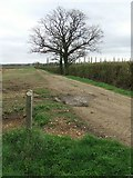 TL6829 : Footpath And Tree by Keith Evans