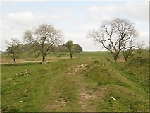 NY9569 : Hadrian's Wall Path by Graham Robson
