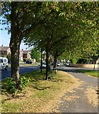 SK5605 : Path next to the A50 Groby Road by Mat Fascione