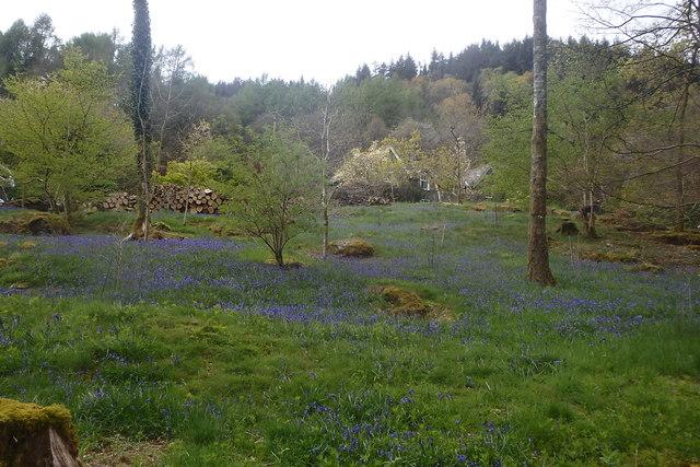 Bluebells, Furnace Wood