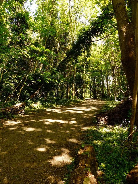 Woodland on the Sefton Coastal Path