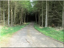 NO2104 : Track through the woods, Lomond Hills by Bill Kasman