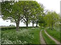 SK3823 : Tree-lined track and footpath by Graham Hogg