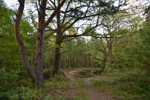 East Devon : Uphams Plantation