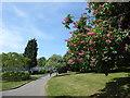 TQ5189 : Path in Lodge Farm Park by Marathon