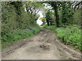SW8753 : Track from road to Oak Tree Covert by Peter Wood