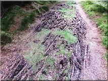 NO2003 : The well-used path to West Feal farm, Lomond Hills by Bill Kasman