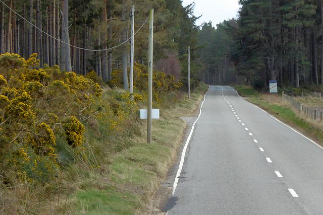 A939 Achnatone Wood
