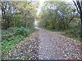 SJ9694 : Trans Pennine Trail by Gerald England