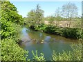 SO5170 : The River Teme below Ashford Bowdler church by Philip Halling