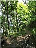 SX9265 : Path, Babbacombe by Derek Harper