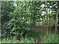 TF9801 : Woodland beside Norwich Road (B1108), Scoulton by JThomas