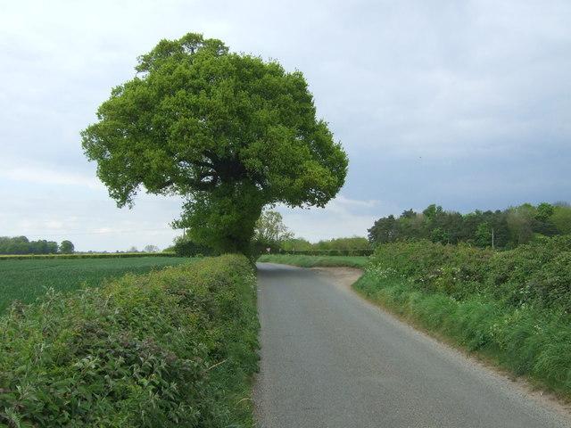 Bradman's Lane
