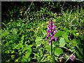 H5255 : Wildflower, Latbeg by Kenneth  Allen