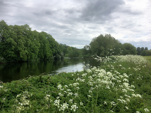 River Trent, Meadowside