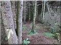 NO2304 : Path to Drumain Reservoir, Lomond Hills by Bill Kasman
