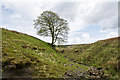 NY8045 : Lone tree below Coalcleugh by Trevor Littlewood