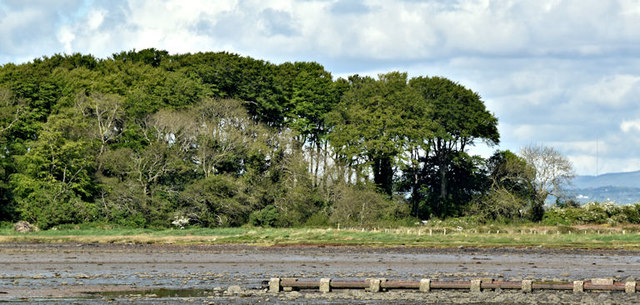 Mid Island, Strangford Lough - May 2017(1)