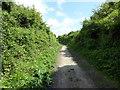 TQ4901 : Public Bridleway: The Comp by PAUL FARMER