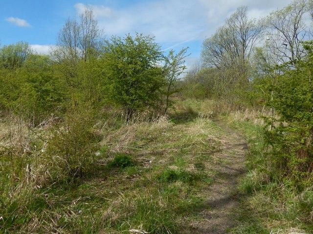 Path near the River Leven