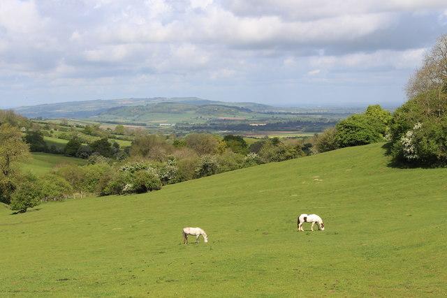 Horses grazing in the spring sunshine near Farmcote