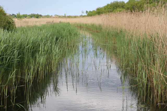 Ditch at Carlton Marshes