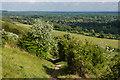 TQ1751 : Path on Box Hill by Ian Capper