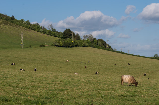 Belties, Lower Boxhill Farm