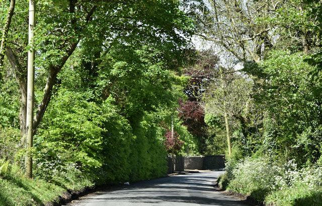 The Killultagh Road near Stoneyford (May 2017)