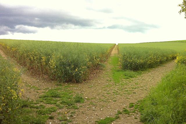 Paths on Chalton Downs