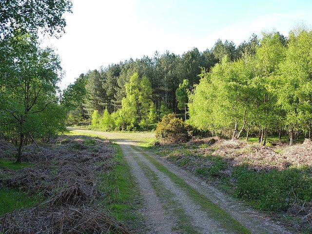 Track through Benty Hill Plantation