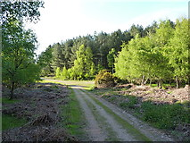 SJ9715 : Track through Benty Hill Plantation by Richard Law