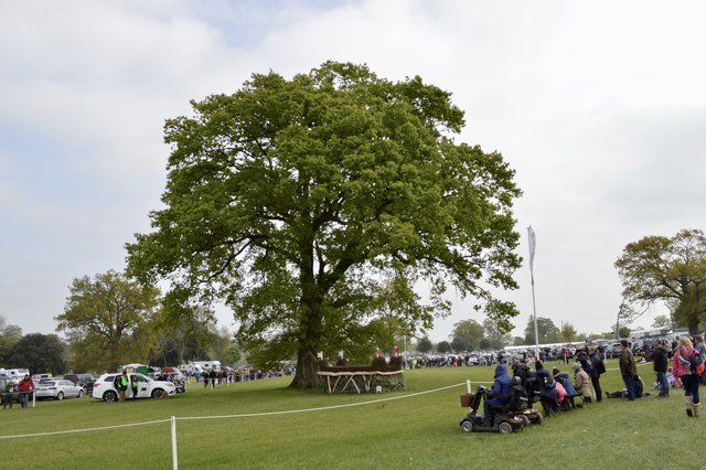 Badminton Horse Trials 2017: cross-country fence 27 - hedge