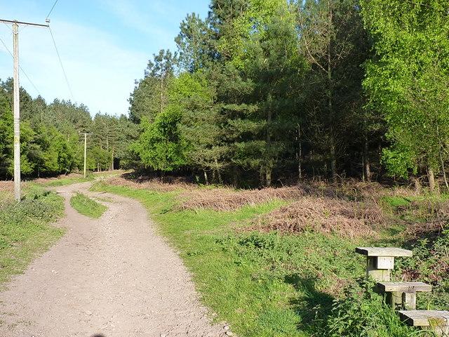 Bridleway into Dark Slade wood